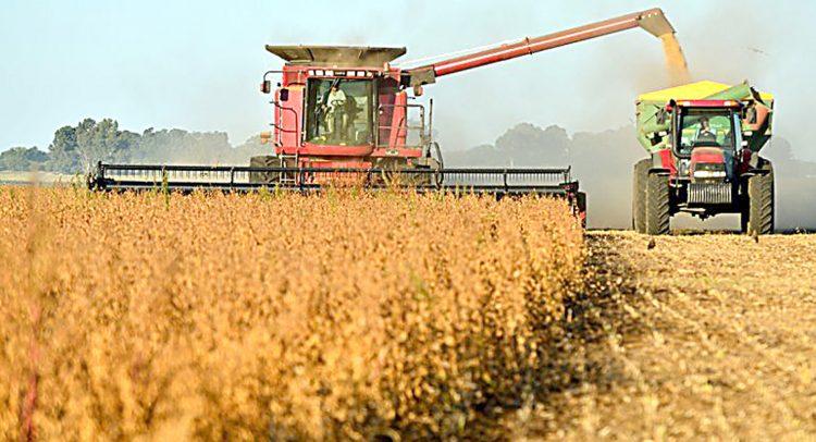 Buenos resultados con sésamo, maíz y soja